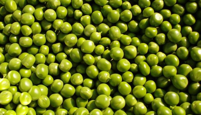 groszek zielony